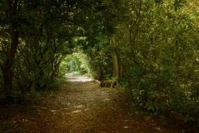 Castleton House wood walk-17