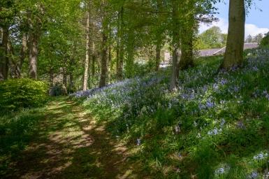Castleton House woods-14